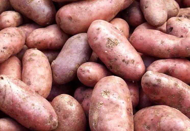 Борьба с болезнями картофеля на хранении