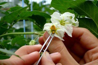 Научно-производственный центр картофелеводства