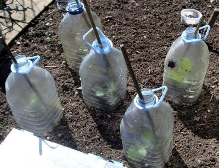 Парник из пластиковой бутылки
