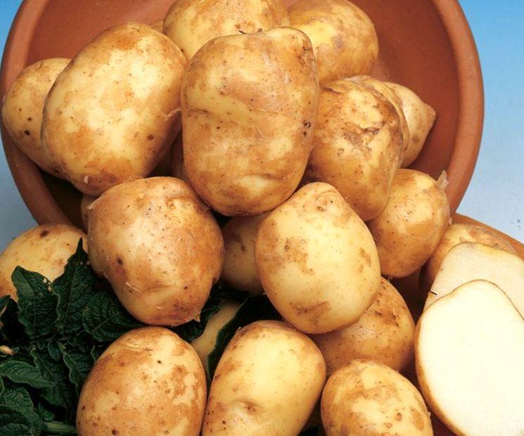 Раннеспелая картошка
