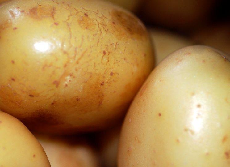 Центр картофелеводства